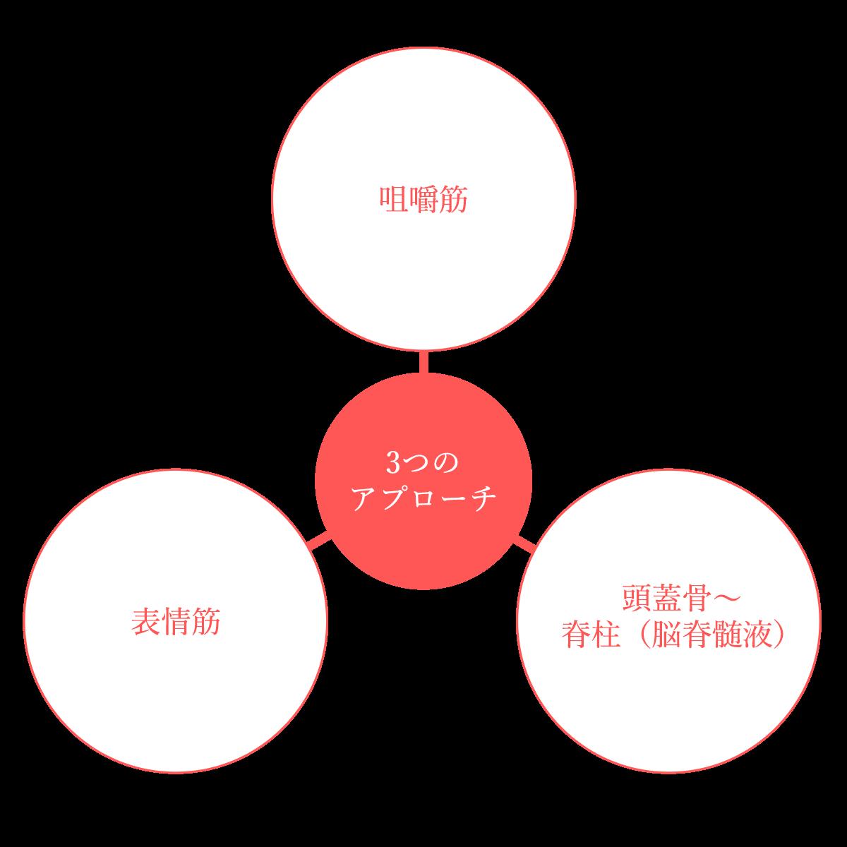 咀嚼筋 表情筋 頭蓋骨〜 脊柱(脳脊髄液) 3つのアプローチ